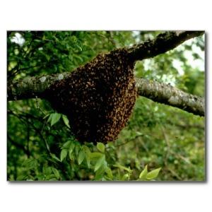 honeybees_post_cards-r016dfcd52a904a58927e034574095d33_vgbaq_8byvr_512