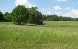 pic field 2